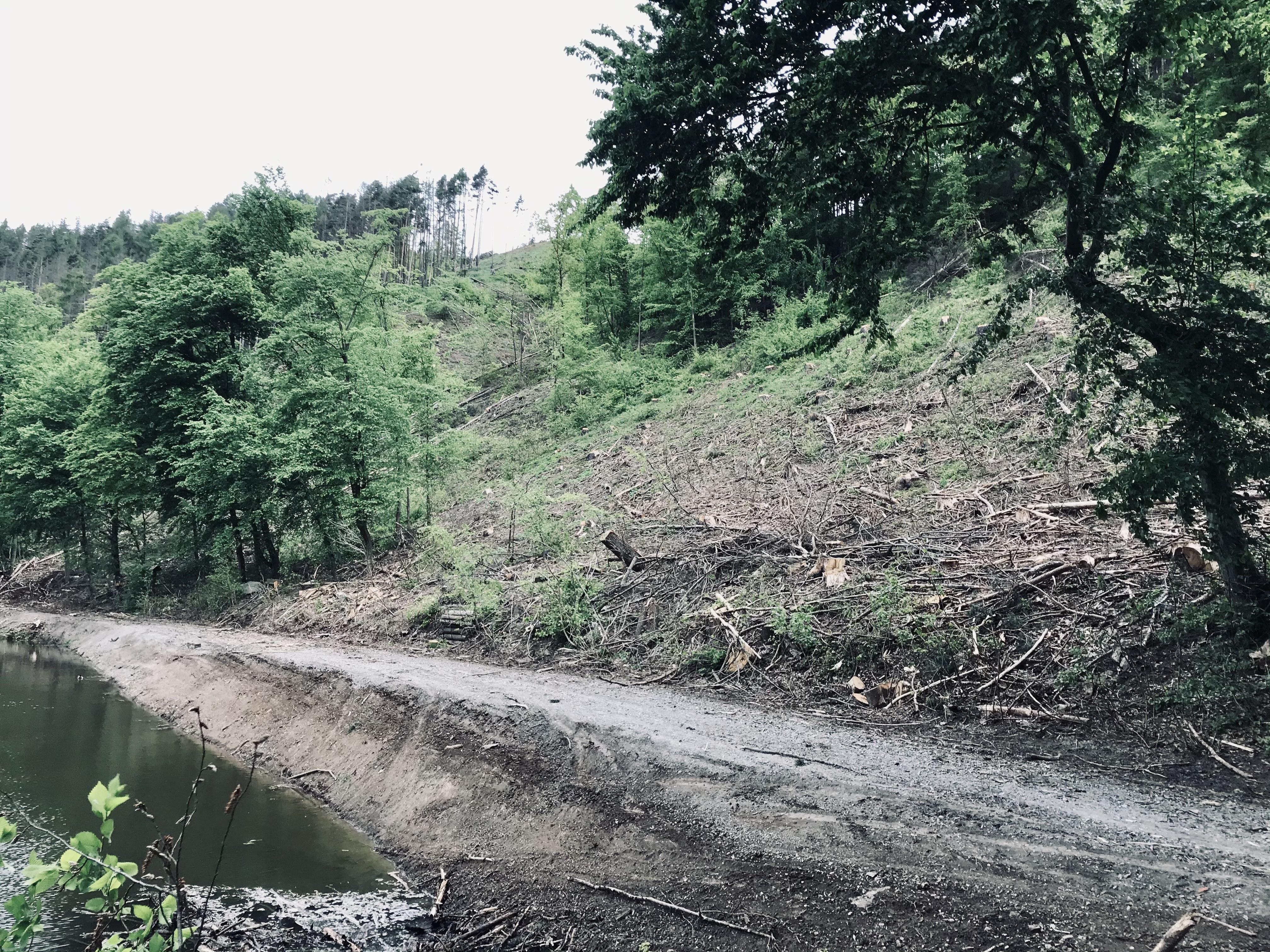 Vedení města se zabývalo také situací v Pilském údolí, kde došlo k rozsáhlejší těžbě dřeva v soukromých lesích rodiny Mensdorff-Pouilly a práce zasáhly i veřejné komunikace