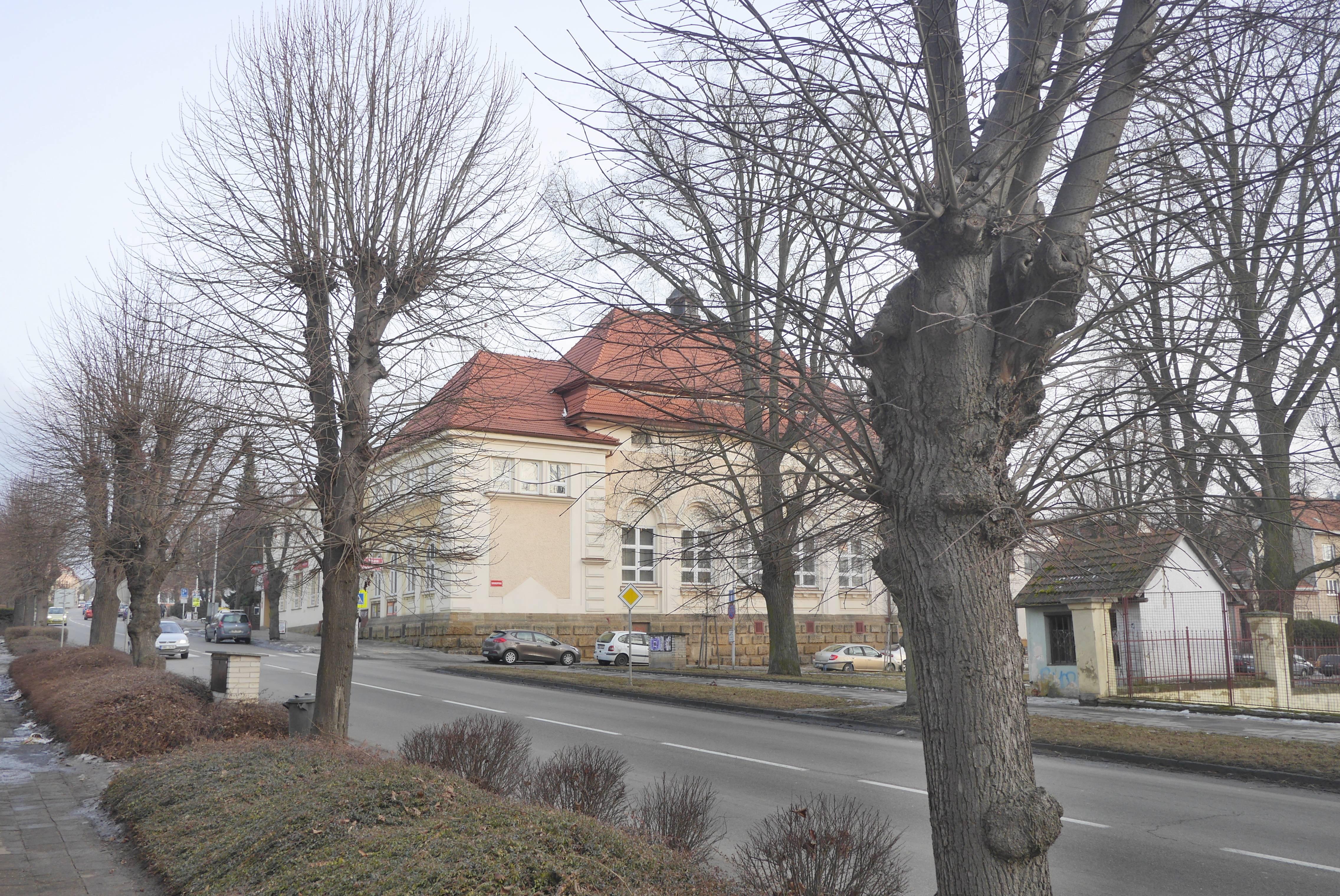 Lípy na Sokolské čeká letos pravidelný ořez